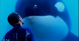 Special Event Screening and Q&A of Blackfish