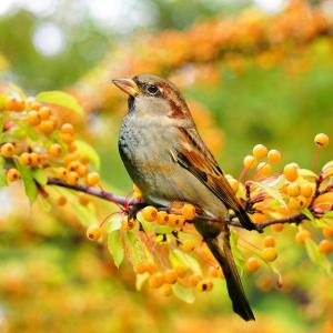 Landscaping for Birds, Bugs and Beyond