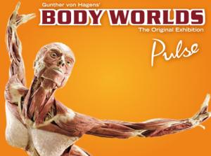 Body Worlds Pulse